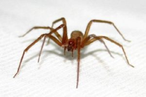 Dedetizadora de aranhas em Jardim Paraguaçu