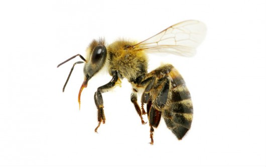 Dedetizadora de abelhas em Jardim Paraguaçu