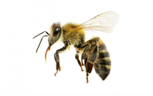 Dedetizadora de abelhas em Conjunto Habitacional Águia de Haia