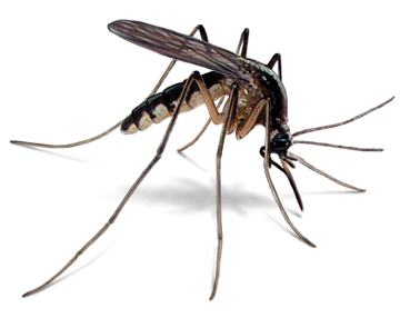 Dedetizadora de Mosquito em Guarujá