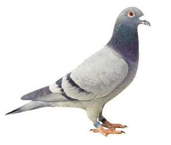 Dedetizadora de pombos em Jardim Myrna